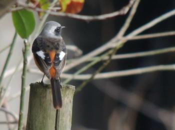 イメージ 野鳥